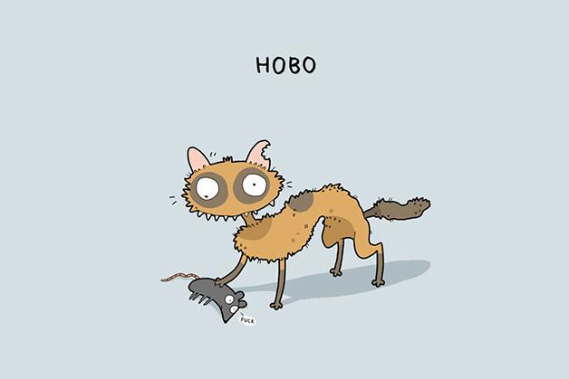 tipos-gato10