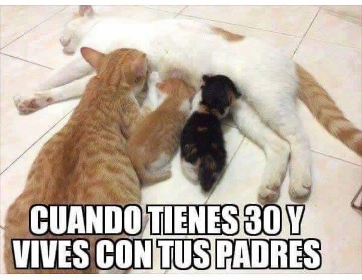 Marcianadas_228_2204160101 (162)