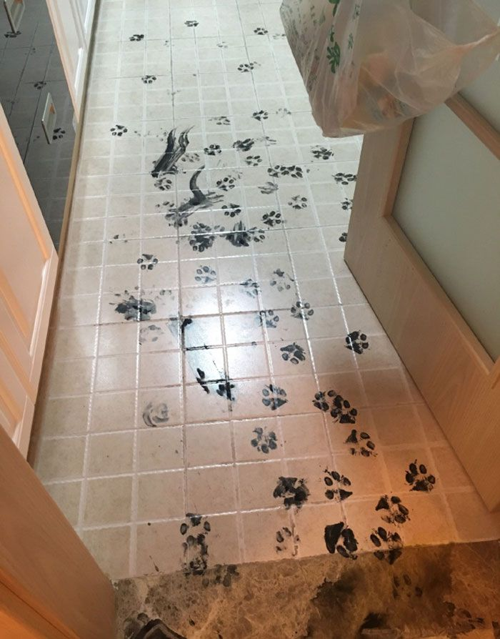 husky hace un desastre casa (5)