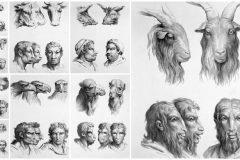 Semejanzas entre el rostro animal y el humano