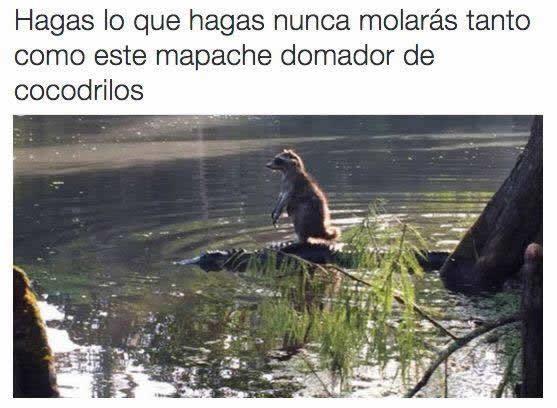 Marcianadas_231_1305161256 (192)