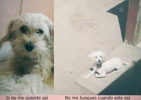 Marcianadas_232_2005161254 (108)
