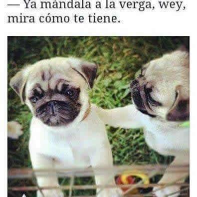 Marcianadas_233_2705160947 (29)