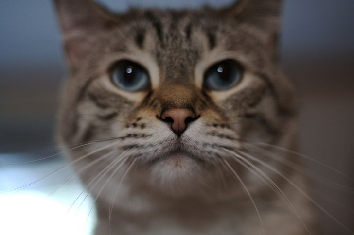 gato curioso