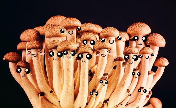 hongos alucinados con ojos