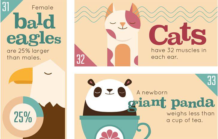 infografia animales portada1