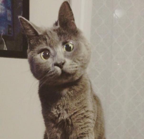 kevin gato sorprendido (1)