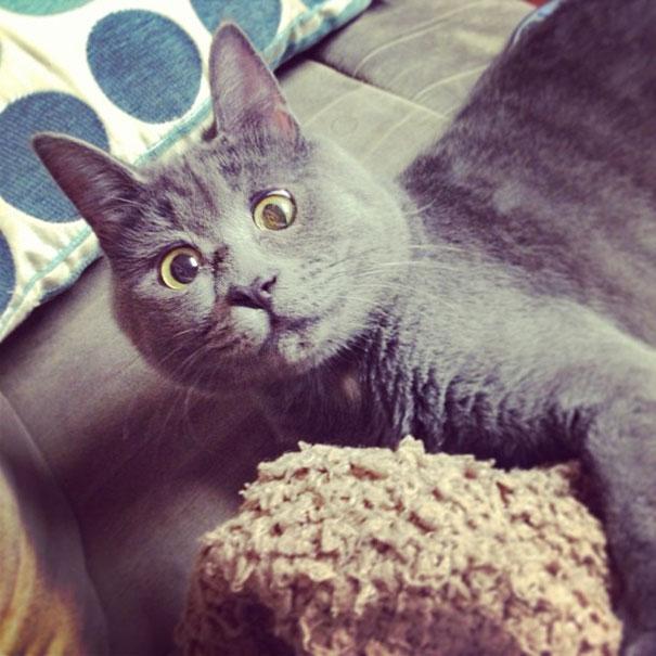 kevin gato sorprendido (2)