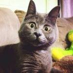 Kevin, el gato con cara de sorpresa que está vivo contra todo pronóstico