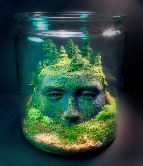 rostro terrario