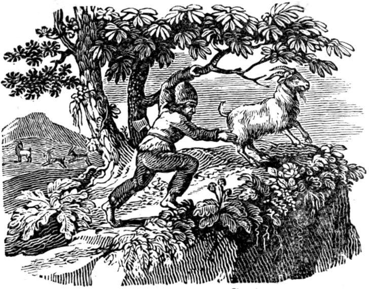 Alexander Selkirk ciada cabra
