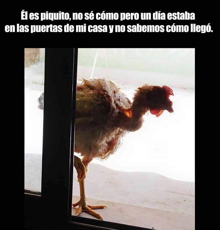Marcianadas_236_c3_17061600 (1)