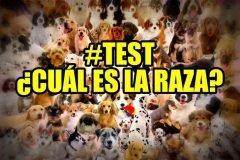 Test: ¿cuántas razas de perro puedes identificar?