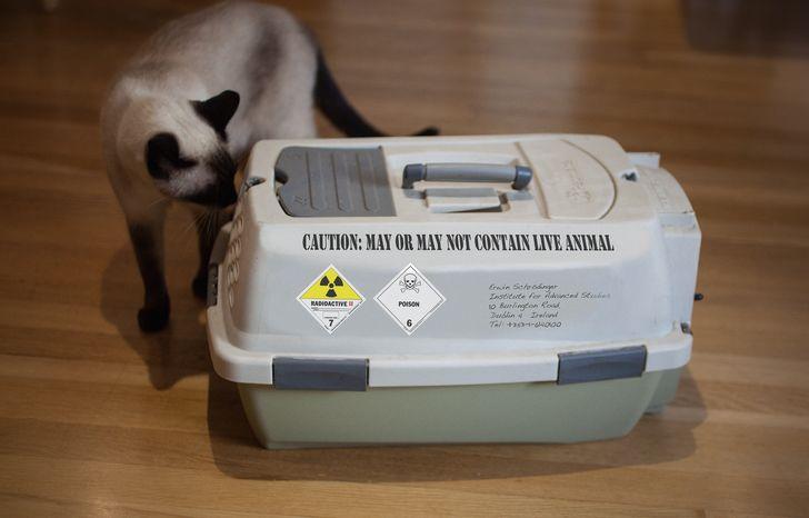 caja gato vivo-muerto
