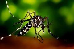 La increíble ciencia tras la picadura del mosquito