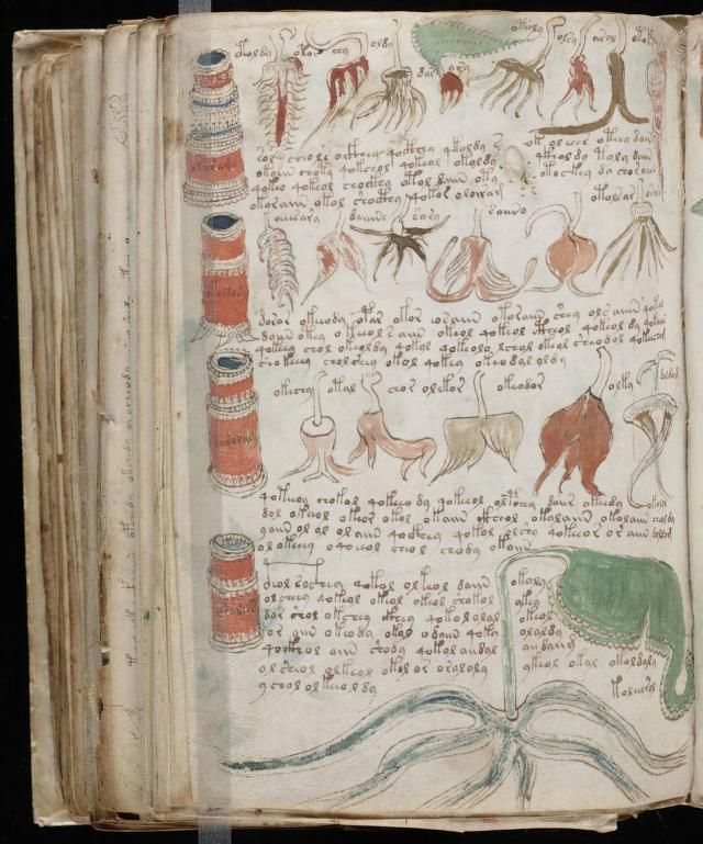 paginas del Manuscrito Voynich (11)