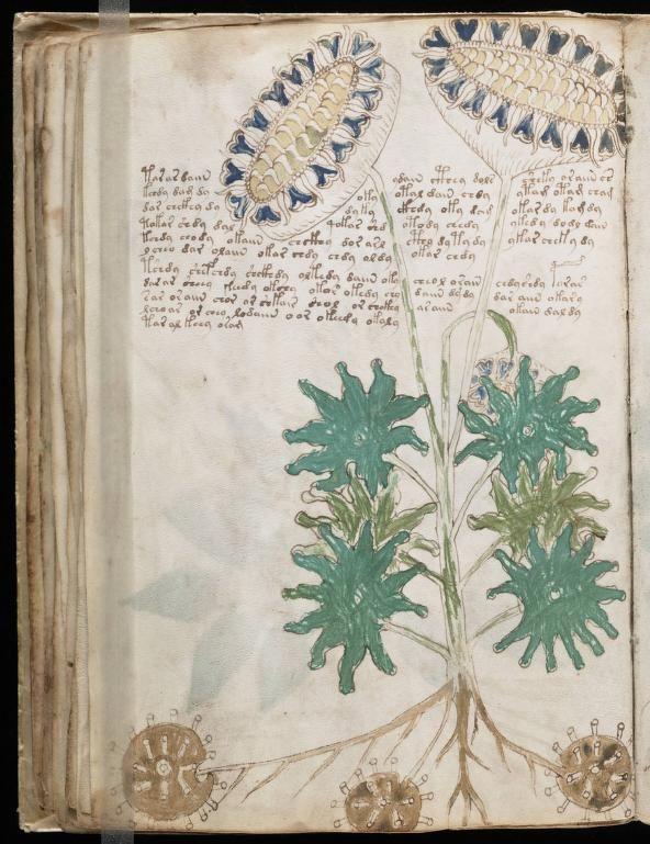paginas del Manuscrito Voynich (3)
