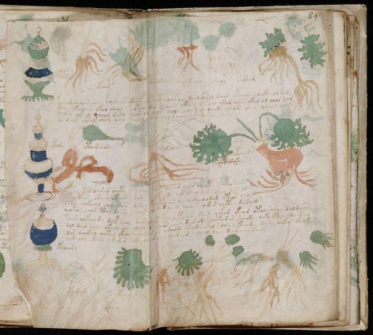 paginas del Manuscrito Voynich (9)