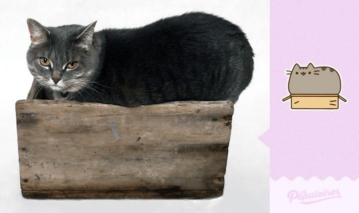 pusheen gato vida real caja (2)