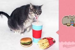 Hombre recreó los stickers Pusheen de Facebook con su gato