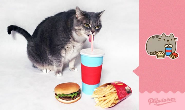 pusheen gato vida real comida rapida (5)