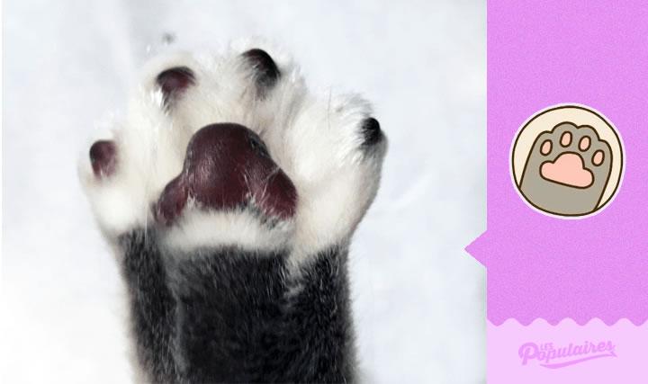 pusheen gato vida real dame cinco(10)
