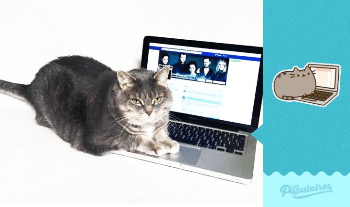 pusheen gato vida real laptop (7)