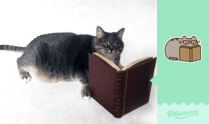 pusheen gato vida real lectura (9)