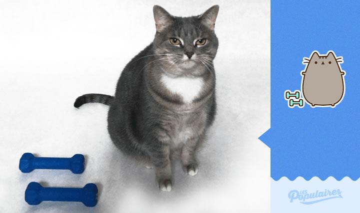 pusheen gato vida real pesas(1)