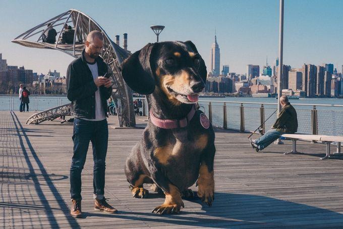 vivian perra gigante (3)