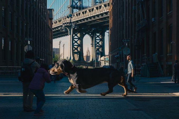 vivian perra gigante (6)