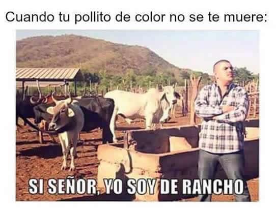Marcianadas_239_0807161253 (266)