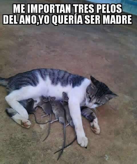 Marcianadas_240_1507161312 (105)