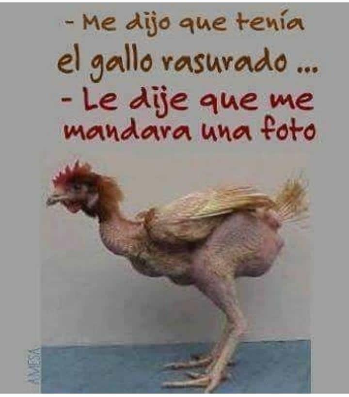 Marcianadas_240_1507161312 (124)