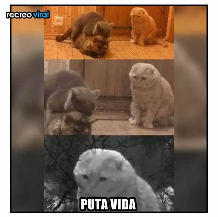 Marcianadas_240_1507161312 (248)
