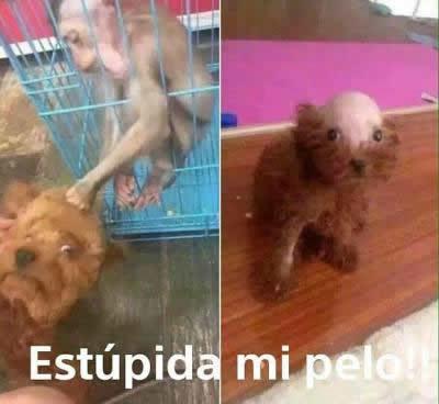 Marcianadas_240_1507161312 (267)