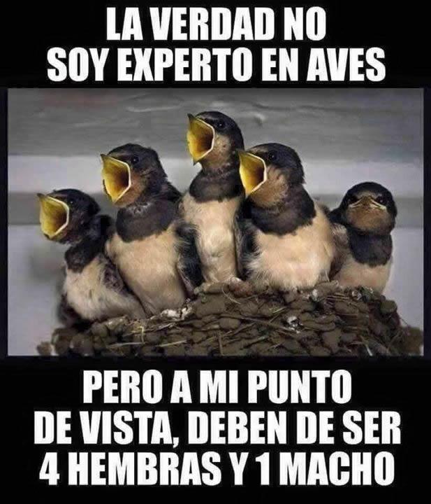 Marcianadas_240_1507161312 (341)