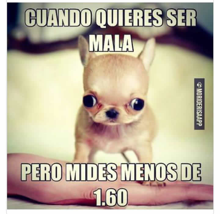 Marcianadas_241_2207160103 (76)