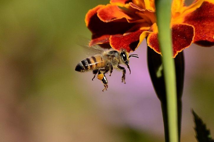 abeja cerca de una flor