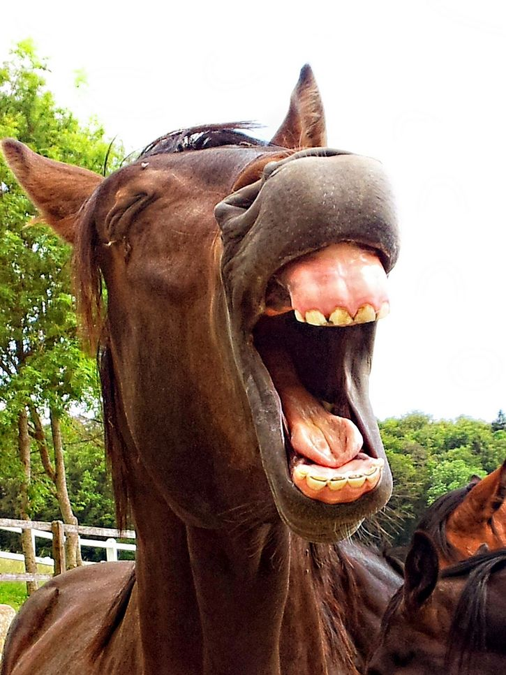caballo dientes