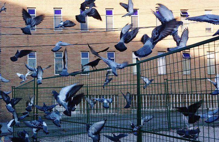grupo de palomas volando