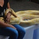 Una mujer solía dormir con su serpiente, lo que le dijo el veterinario es aterrador