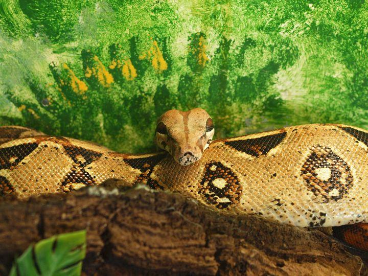 serpiente fondo verde