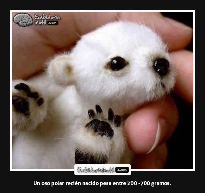 Marcianadas_244_1508161138 (145)