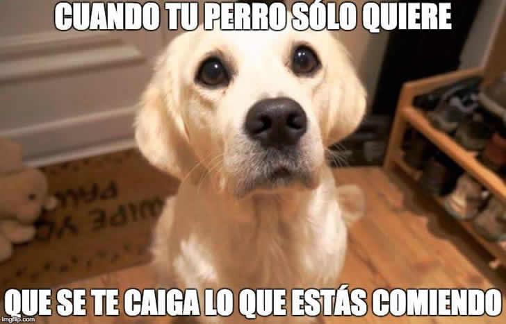 Marcianadas_244_1508161138 (232)