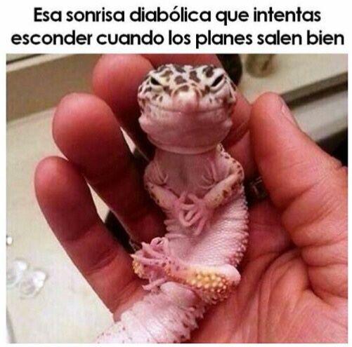 Marcianadas_245_1908160110 (100)