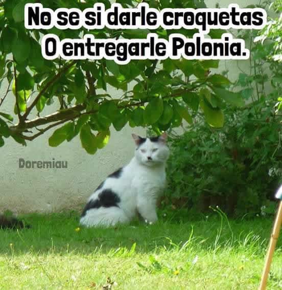 Marcianadas_245_1908160110 (96)