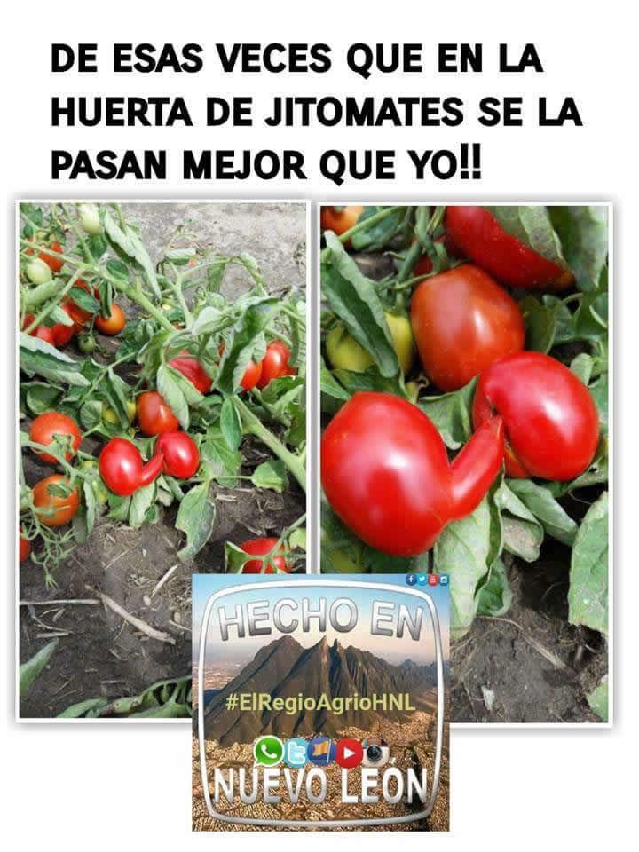 Marcianadas_246_2608160105 (181)