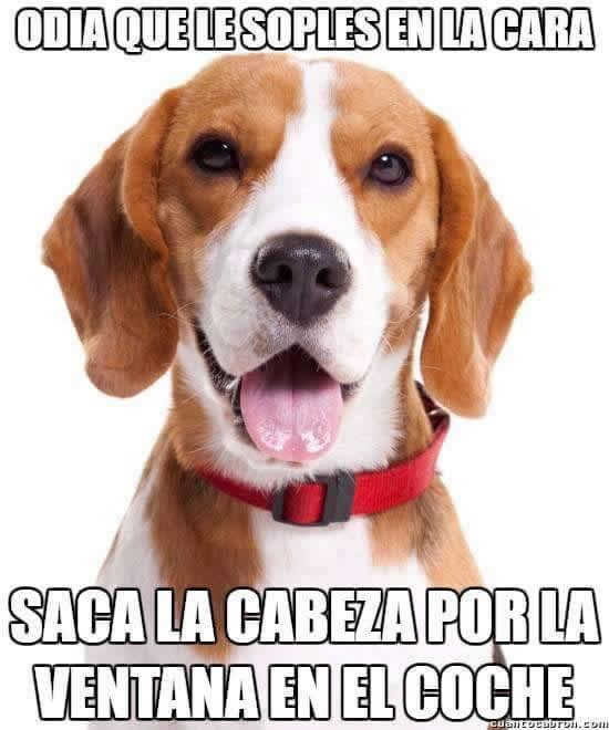 Marcianadas_246_2608160105 (72)