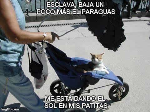 Marcianadas_246_2608160105 (78)